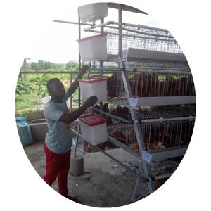 Poultry chicken farm building animal cages for chicken cages poultry farming animal husbandry equipm